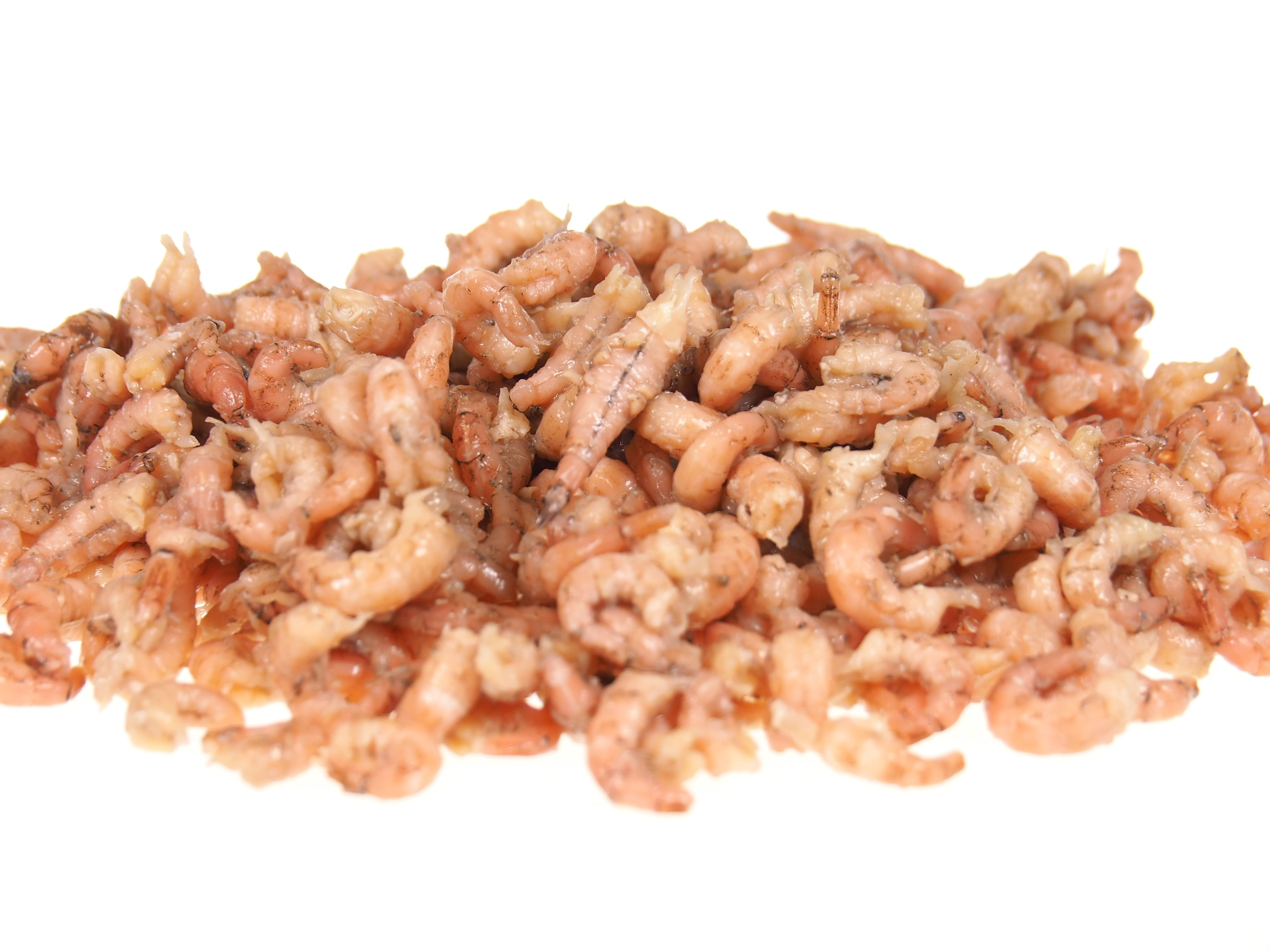 Frischfisch Versand
