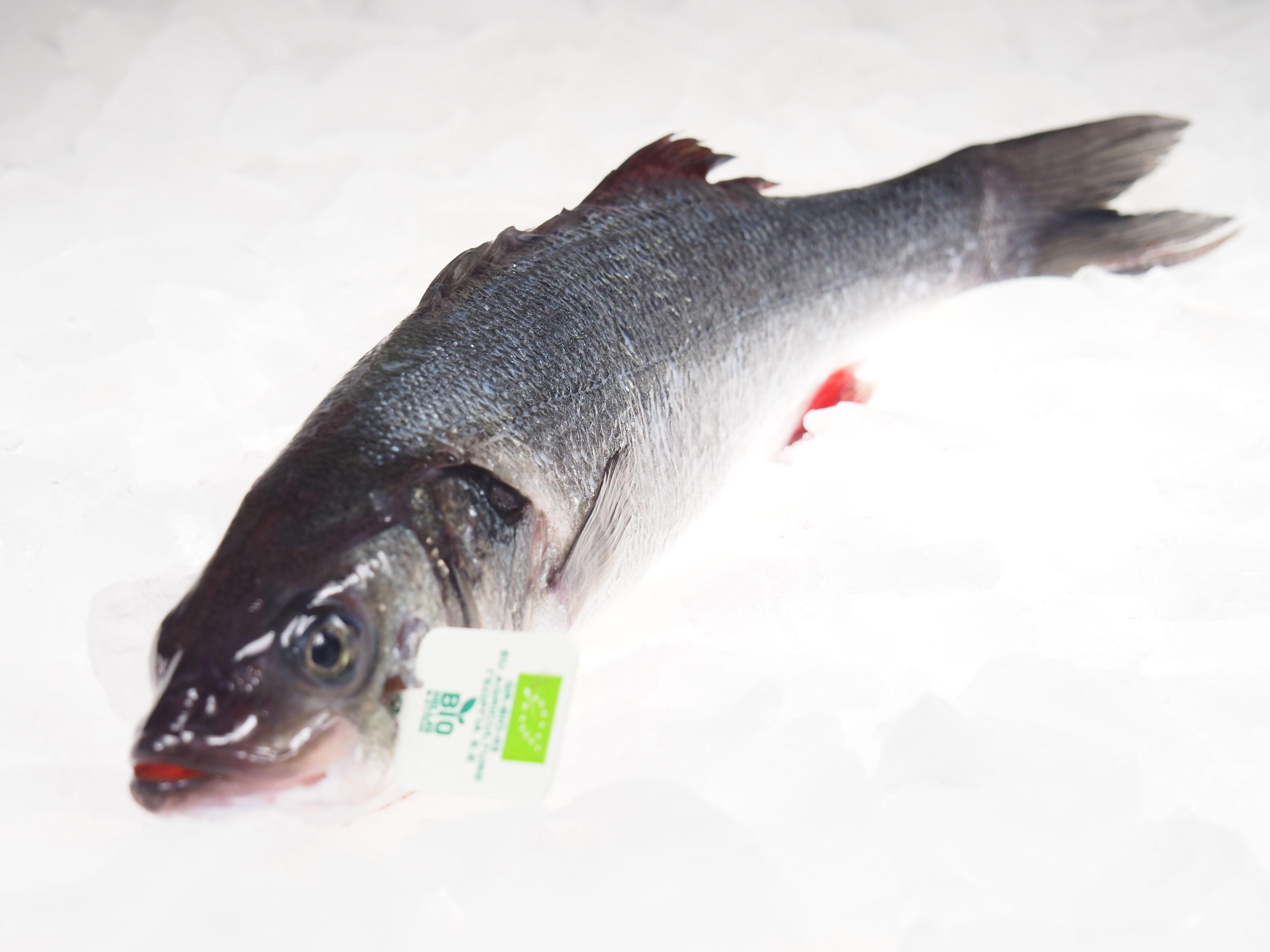 wolfsbarsch bio ganze fische fisch lachskontor frischfisch versand fisch kaufen jetzt. Black Bedroom Furniture Sets. Home Design Ideas