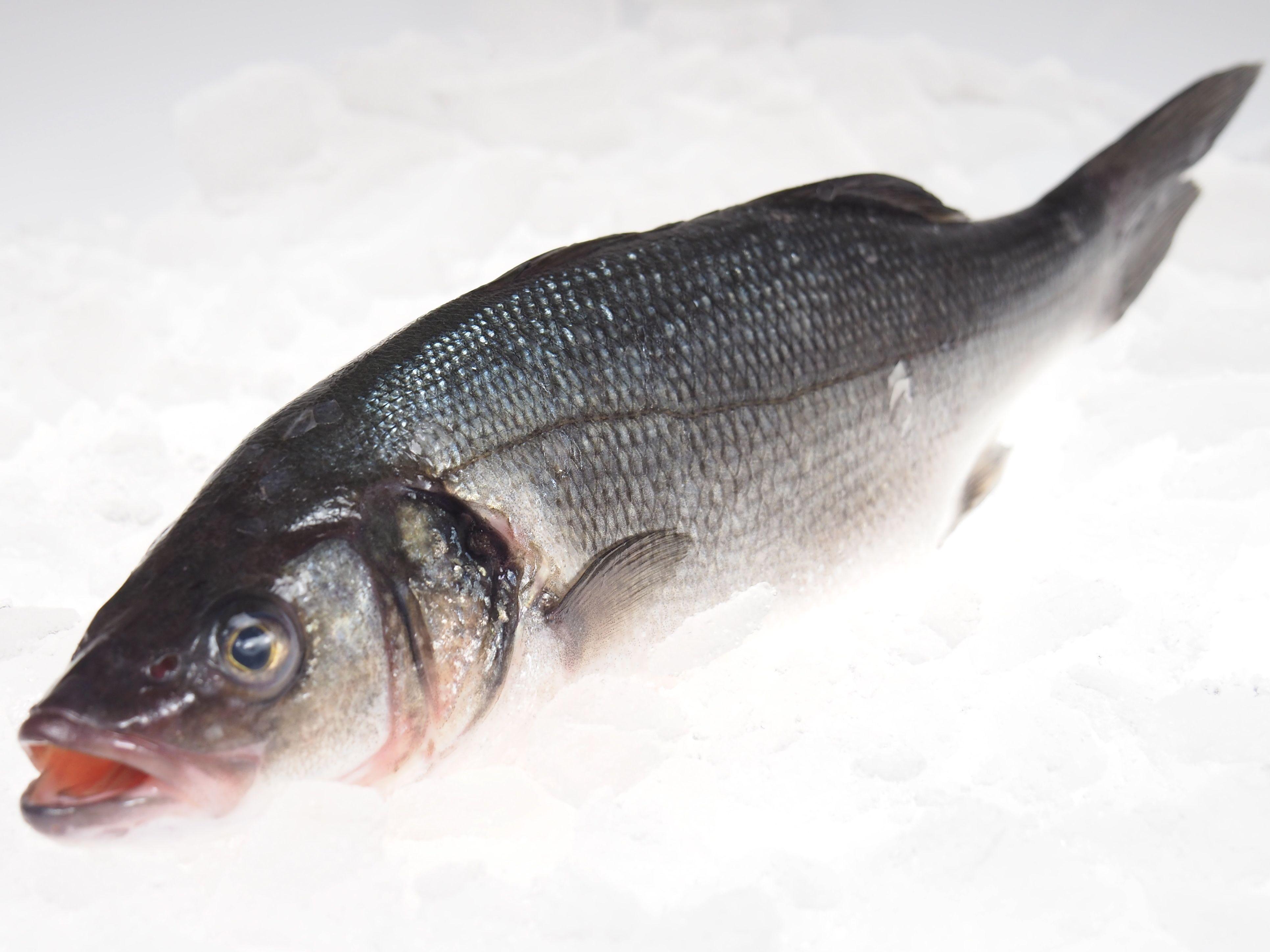 wolfsbarsch ganze fische fisch lachskontor