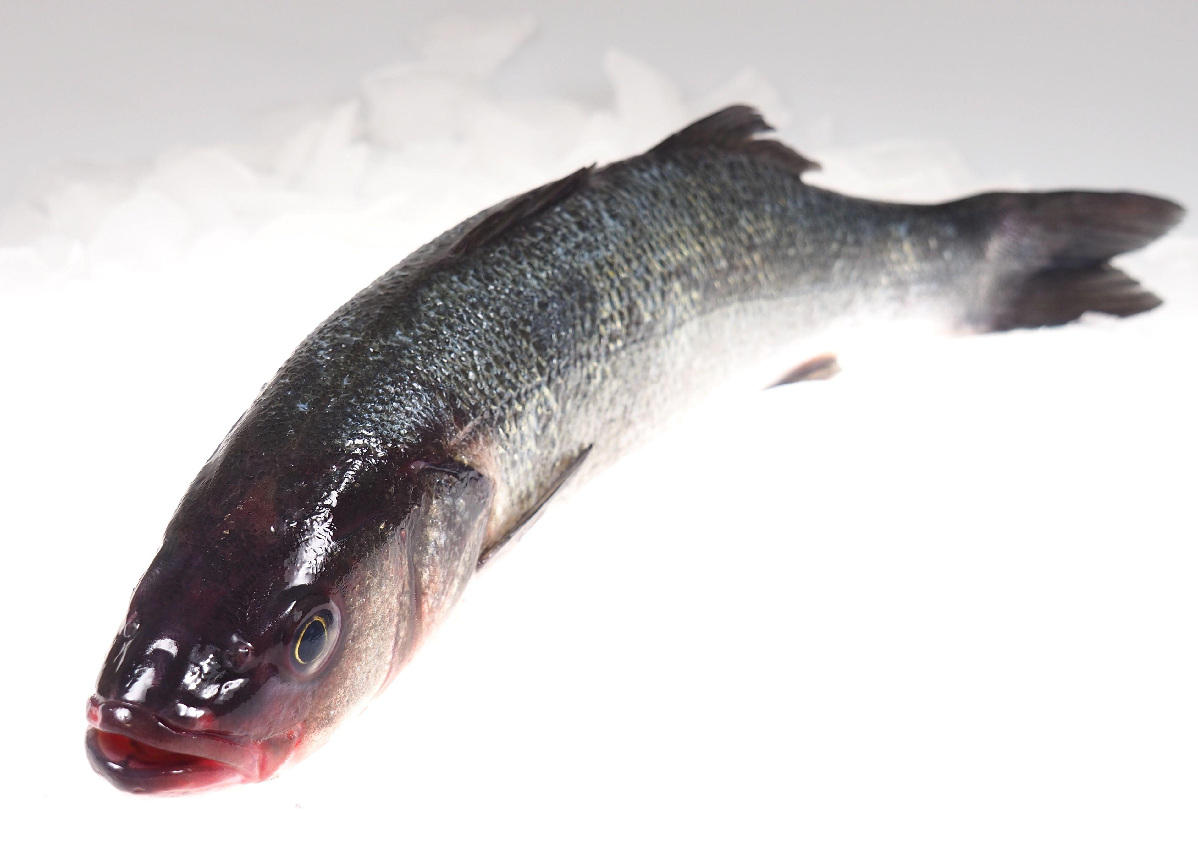 wolfsbarsch gro fisch zum grillen fisch lachskontor frischfisch versand fisch kaufen. Black Bedroom Furniture Sets. Home Design Ideas