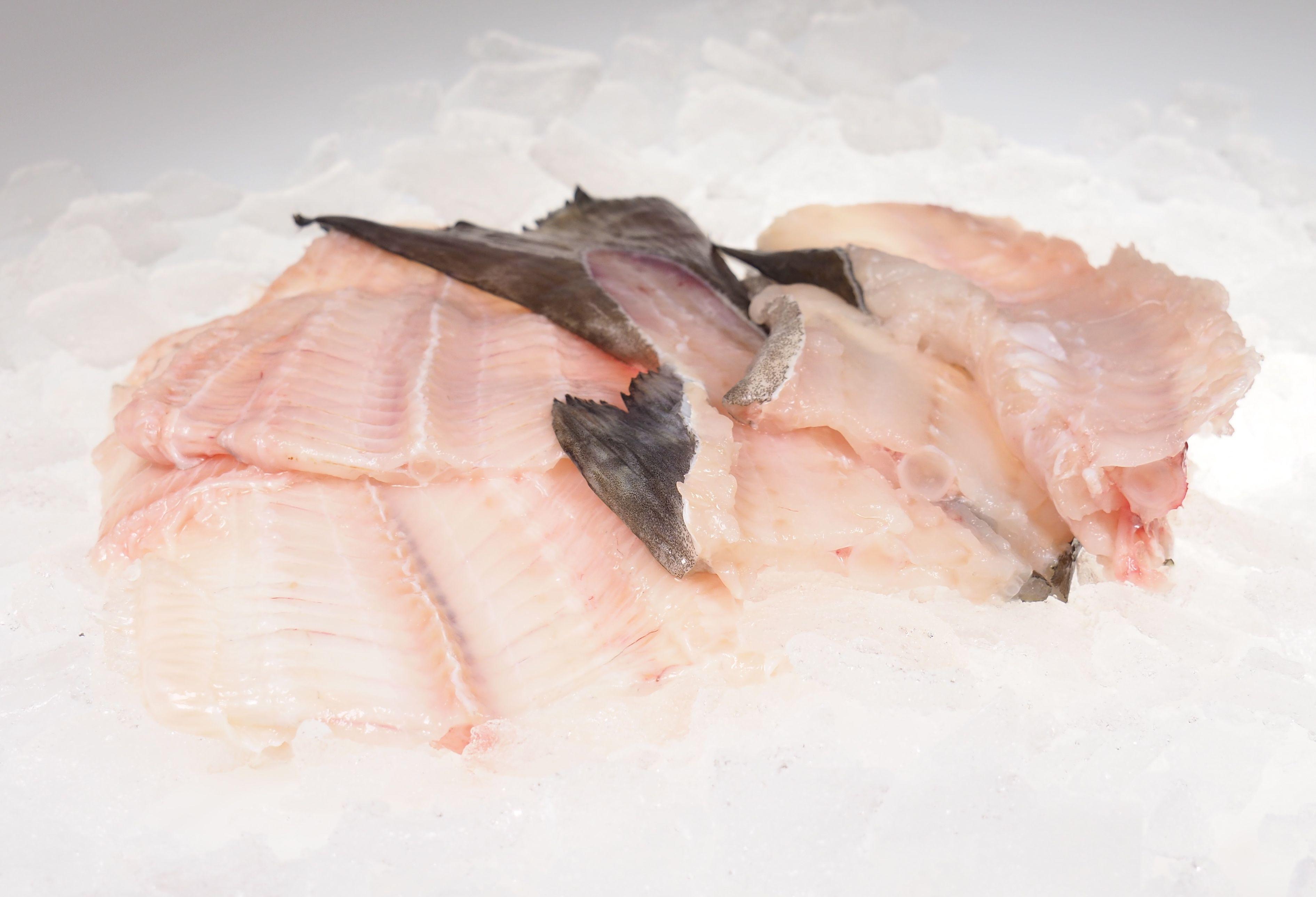Fischkarkassen Kaufen